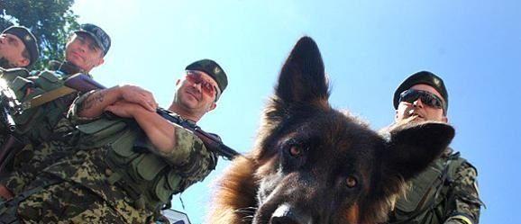 Neun rührende Hundegeschichten aus der Ostukraine