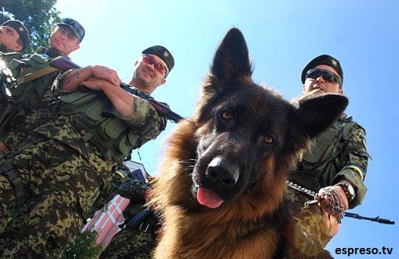 Nine touching stories of dogs from the military conflict area in eastern Ukraine